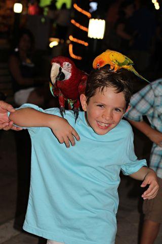 Parrot boy